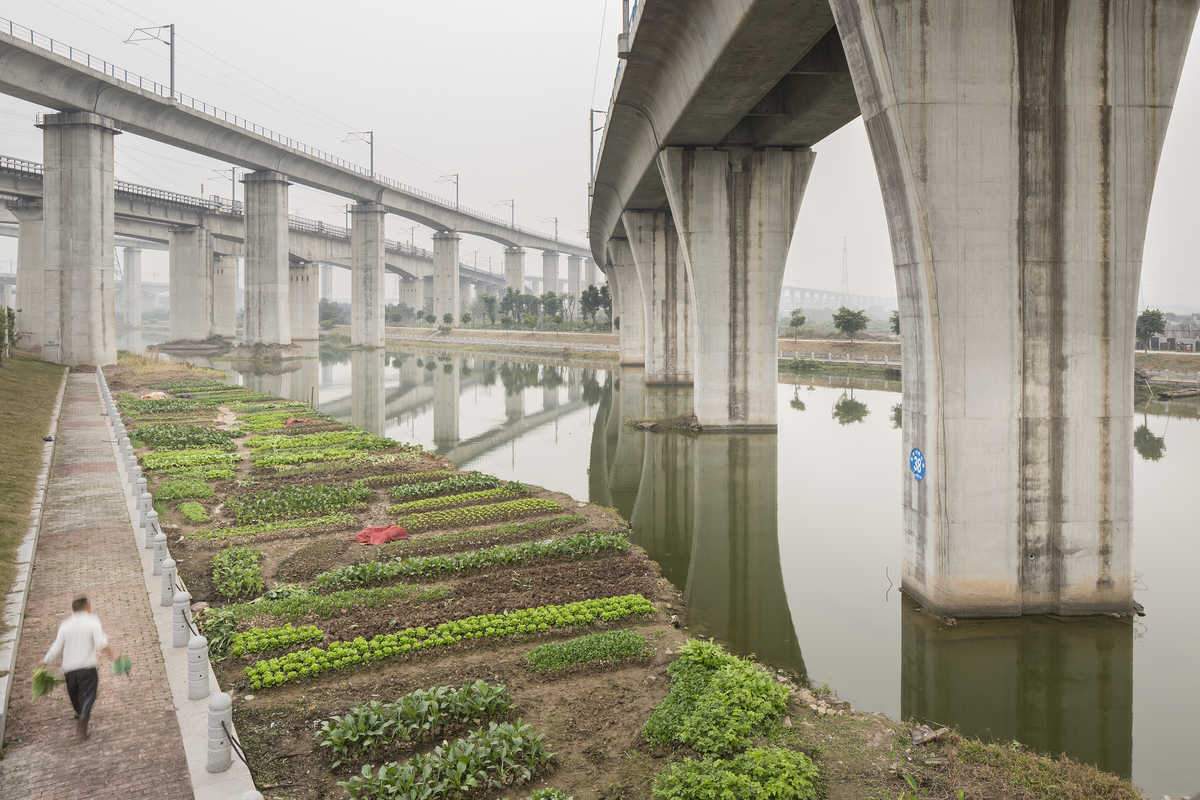 Industrial photograph of an urban farmer tending crops under high speed rail lines near the Guangzhou South Railway Station in Guangdong Province, China.