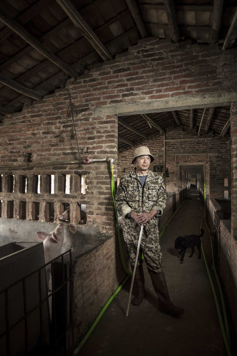 Pig farmer in Zhaoqing, China.