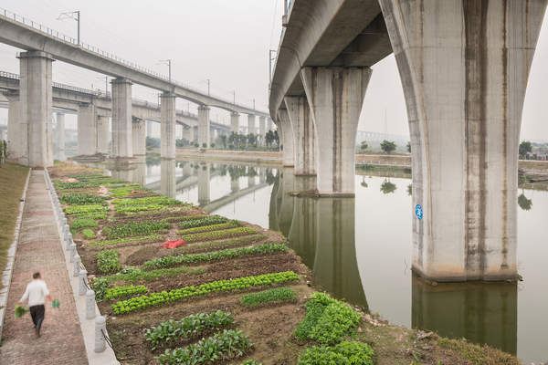An urban farmer tends crops under high speed rail lines near the Guangzhou South Railway Station